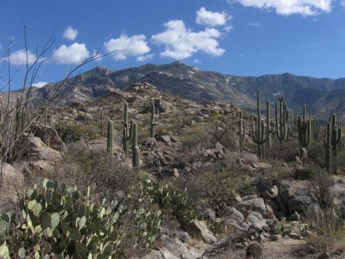 Samaniego Ridge