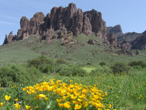 Lost Dutchman State Park in bloom