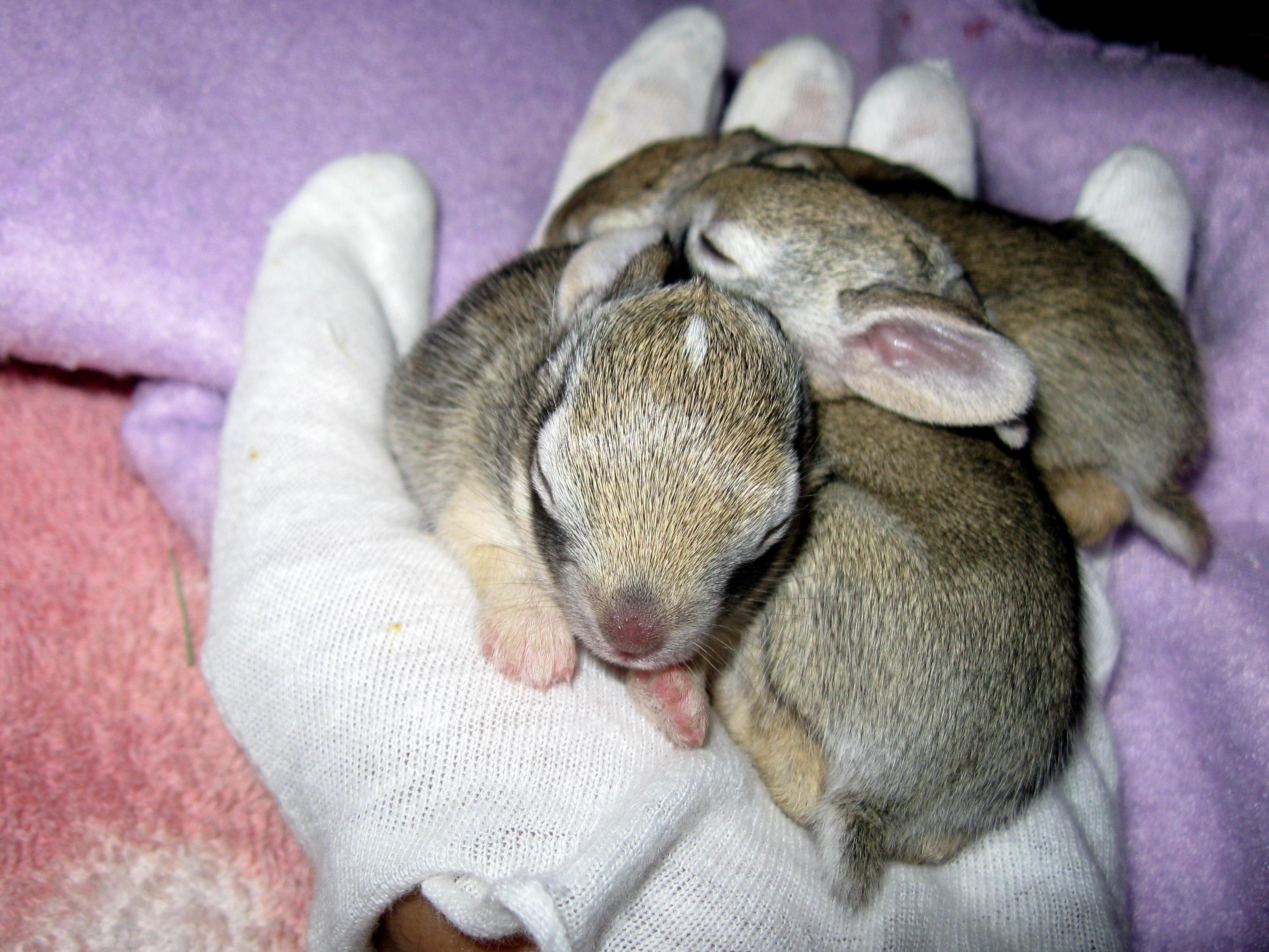 baby rabbits sirena u0027s wanderings