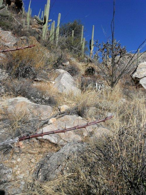 Weaving through the desert vegetation