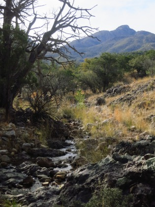 Flow in Big Casa Blanca Canyon below Mt. Wrightson