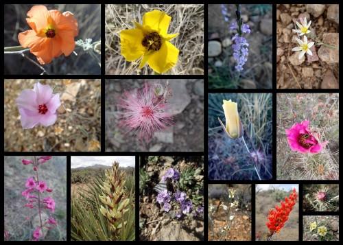 Wildflowers!!