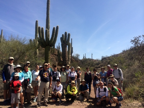 Arizona Trail Day hikers at the first big saguaros headed northbound on the AZT