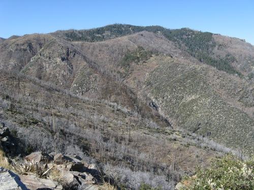 Mt. Lemmon from Oracle Ridge
