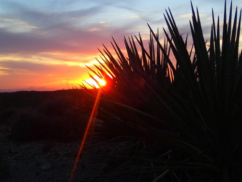 Sunset and Agave