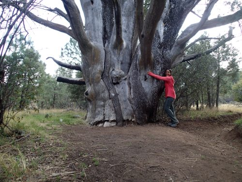 Hugging the giant Juniper