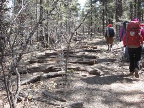 Hiking alongside the historic logging railroad