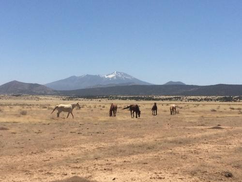 Horses and Peaks