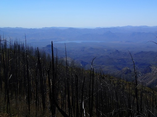 Burned trees and Horseshoe Reservoir