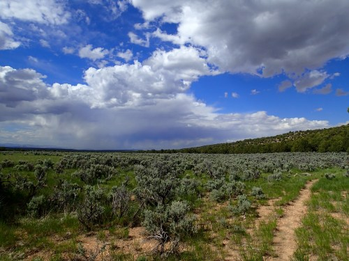 Trail through the sagebrush
