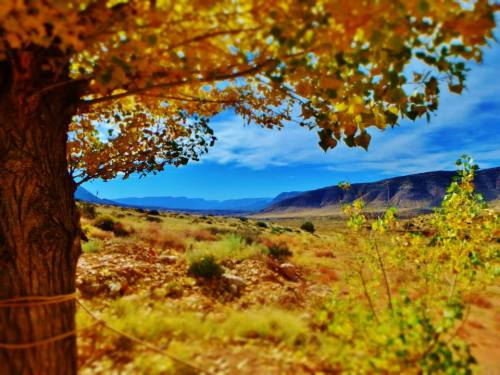 Fall colors on the Bar 10- Photo by Anilee Bundy http://anileebundy.blogspot.com/