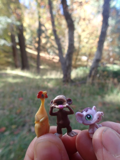 Micro Chicken ran into some friends in the forest