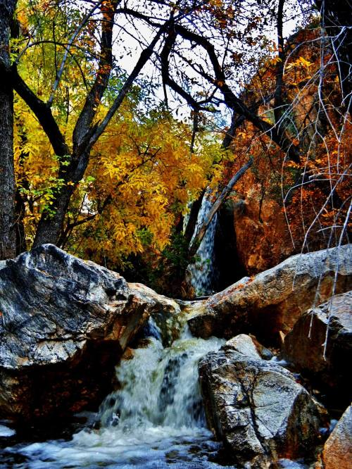 Beautiful Fall Colors in Montrose Canyon- Photo by Dan Kinler