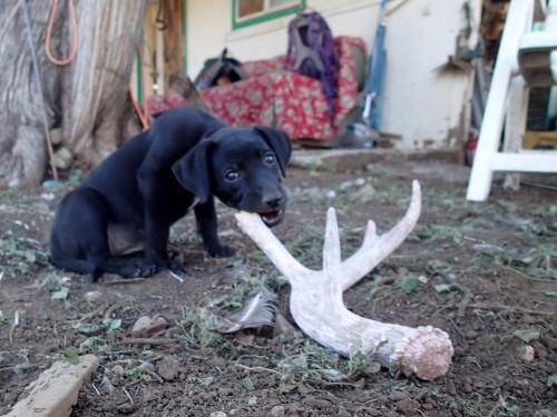 Little Zelda munching on a bone