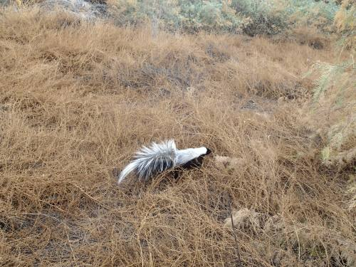 Skunk #2, the more docile one, took off right away!