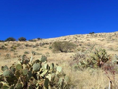 Grassy shindagger and cactus-filled slope to the summit