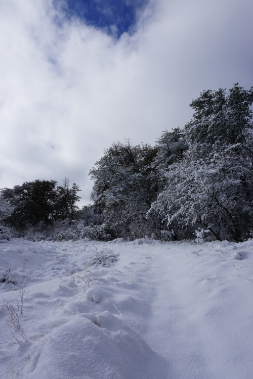 Snowy Arizona Trail