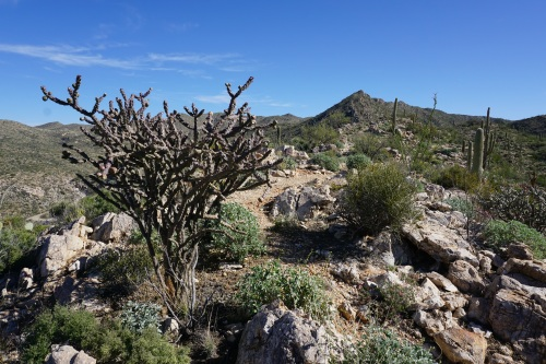 Route from Cochie Canyon to the saddle