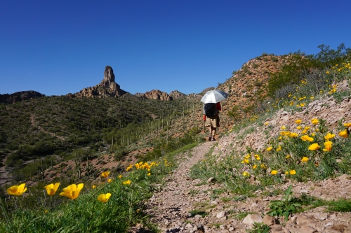 Hiking through the poppy-covered hillsides near Dale's Butte