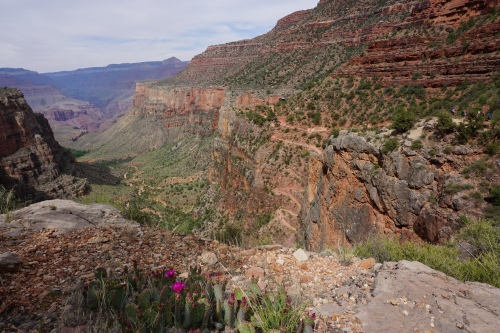 Looking down on the Bright Angel Trail