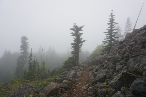Very much what I was expecting- hiking through the mist and tall trees