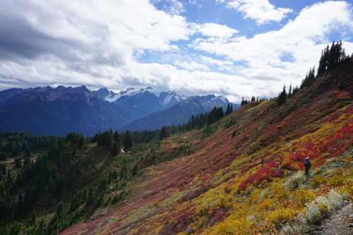 Fall Colors and Mount Olympus