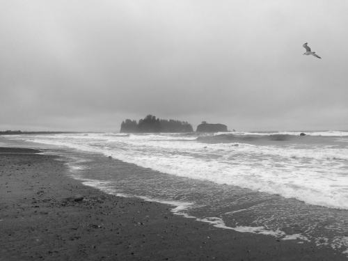 Made a stop at Rialto Beach before driving back- I'll have to come and backpack along the coast someday!