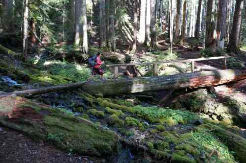 Cute log bridge