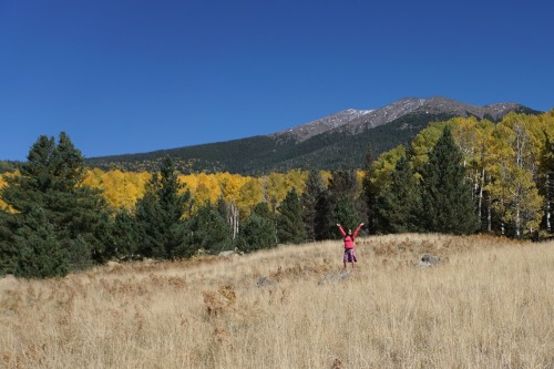 Fall Color on the Arizona Trail north of Snowbowl