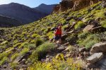 Walking through fields of Brittlebush on the way to 75-mile Creek, Escalante Route