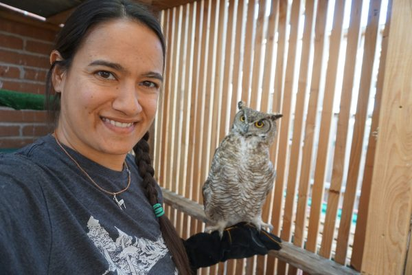 Training a Great Horned Owl