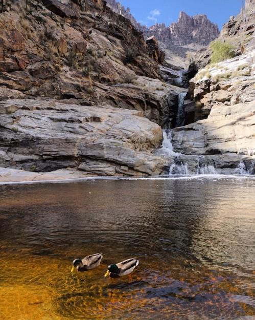 Ducks at Seven Falls