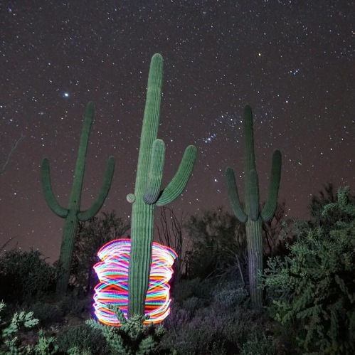 Light Painting in the Saguaros