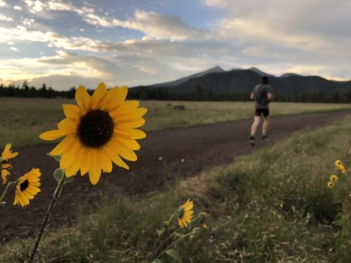 Runner with sunflowers - Arizona Trail, Buffalo Park