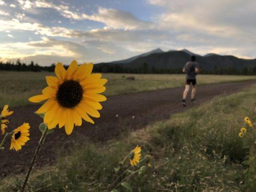 Runner with sunflowers - Arizona Trail, Buffalo Park
