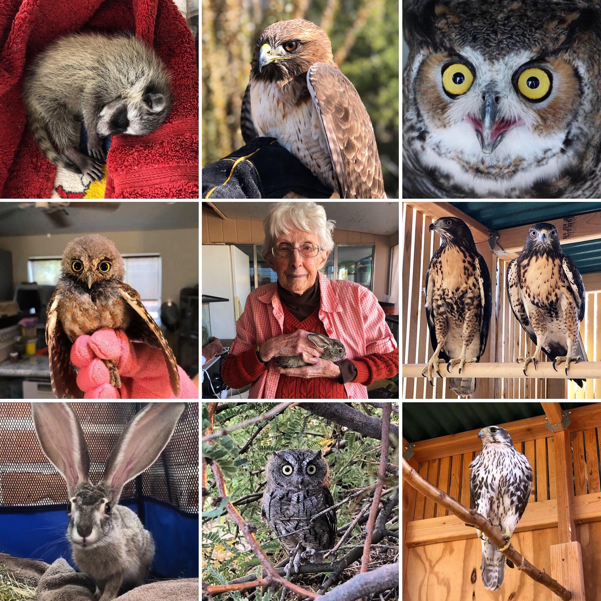 Top Nine Wildlife Rehab 2018